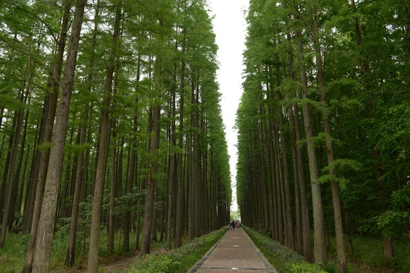 息县森林公园8.png